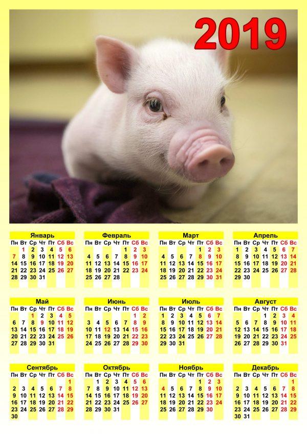 Календарь с свинкой распечатать