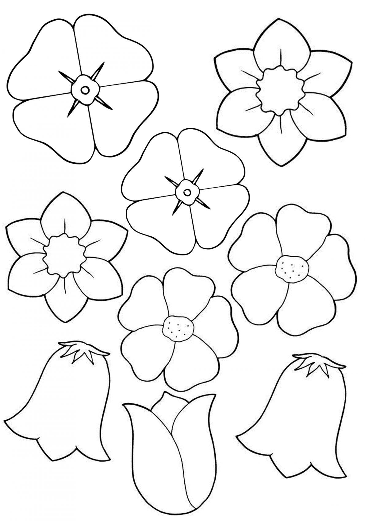 Цветы разные черно-белые распечатать